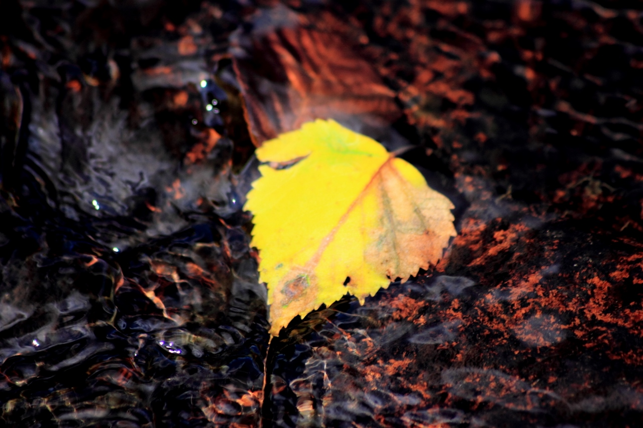 Leaf on water 1